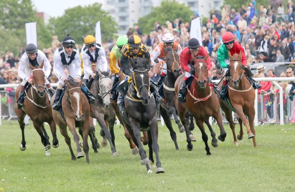 curse de cai inceputul de cursa cai