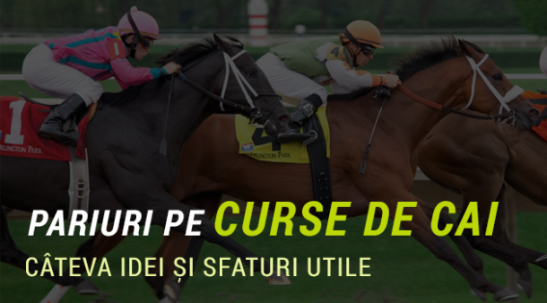 curse de cai pariuri sportive